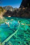 Água colorida Foto de Stock