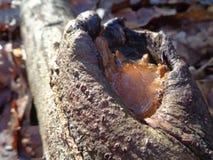 Água congelada em um brache da árvore fotos de stock royalty free