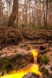 Água contaminada Imagem de Stock