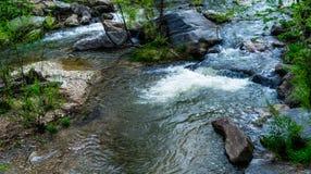 Água corrente nas madeiras foto de stock