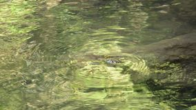 A água corrida através da rocha da batida do rio faz rippled no forset vídeos de arquivo