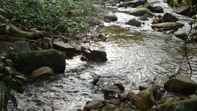 Água corrida através da rocha e da pedra da passagem do rio na floresta vídeos de arquivo