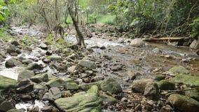 Água corrida através da rocha e da pedra da passagem do rio na floresta filme