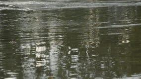 Água corrida através do rio na estação das chuvas filme