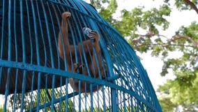 Água da bebida do macaco na gaiola vídeos de arquivo