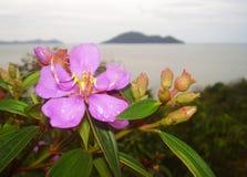Água da chuva na flor Imagens de Stock