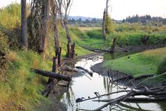 Água da conserva de natureza derramada com árvores velhas Fotos de Stock