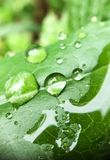 Água da folha Fotografia de Stock
