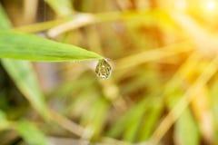Água da gota a folha de extremidade Fotografia de Stock Royalty Free