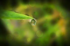 água da gota a folha de extremidade e o bokeh Foto de Stock Royalty Free