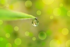 água da gota a folha de extremidade e o bokeh Imagem de Stock