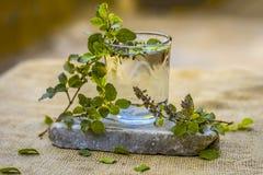 Água da manjericão, do tulsi ou do tenuiflorum santamente do Ocimum em um vidro transparente Fotografia de Stock