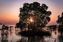 Água da silhueta da árvore dos manguezais com fundo do sol de ajuste Fotografia de Stock Royalty Free