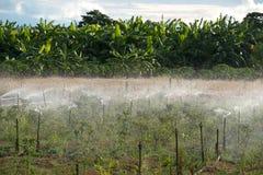 Água de alimentação pelo sistema de sistema de extinção de incêndios Imagens de Stock