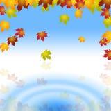 A água de Copyspace representa a placa e o jardim da planta Imagem de Stock