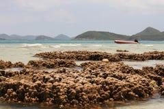 Água de Coral Shallow em Tailândia Fotos de Stock Royalty Free