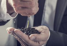 A água de derramamento do homem de negócios sobre uma planta verde nova realizou em seu h Foto de Stock