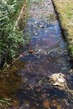 A água de esgoto e o agregado familiar sujos rubbish no rio pequeno, crescimento rápido das causas do canal de irrigação das alga imagens de stock royalty free