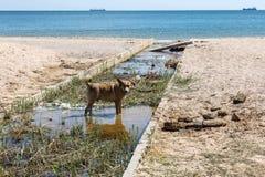A água de esgoto e o agregado familiar sujos rubbish no rio pequeno, crescimento rápido das causas do canal de irrigação das alga imagem de stock royalty free