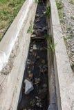 A água de esgoto e o agregado familiar sujos rubbish no rio pequeno, crescimento rápido das causas do canal de irrigação das alga foto de stock royalty free