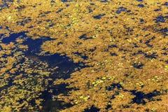 A água de esgoto e o agregado familiar sujos rubbish no rio pequeno, crescimento rápido das causas do canal de irrigação das alga foto de stock