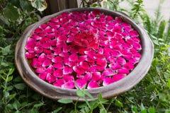 Água de flutuação vermelha da pétala cor-de-rosa Imagem de Stock