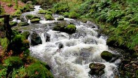 Água de fluxo rápida vídeos de arquivo