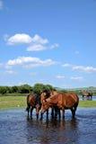 Água de Gunma Yimin River foto de stock royalty free