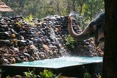 Água de jogo do elefante Imagens de Stock Royalty Free