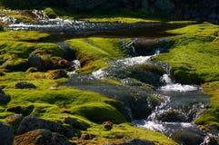 Água de mola Foto de Stock