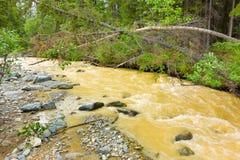 Água de pressa enlameada pela mineração de placer em Canadá do norte Imagens de Stock Royalty Free