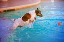 Água de salto do tiro da ação do cão Imagem de Stock