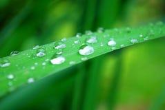 A água deixa cair a folha Fotografia de Stock