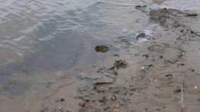 A água derrama de uma mangueira plástica Árvores molhando video estoque