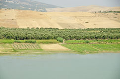 Água & deserto Foto de Stock