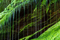 Água do gotejamento Fotografia de Stock