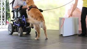 Água do guia e do cão do auxílio video estoque