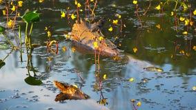 Água do início de uma sessão com algas e as flores amarelas video estoque