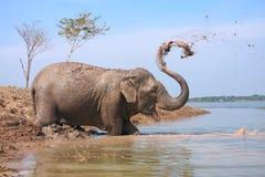 Água do jogo do elefante fotos de stock royalty free