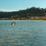 Água do lago e natureza, Castel Gandolfo, pato no lago Fotos de Stock Royalty Free