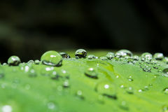 Água do orvalho da gota à esquerda Fotografia de Stock Royalty Free