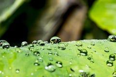 Água do orvalho da gota à esquerda Foto de Stock Royalty Free