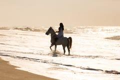 Água do passeio do cavalo da mulher Imagens de Stock Royalty Free