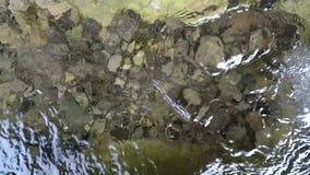 Água do ` s do ribeiro do córrego vídeos de arquivo