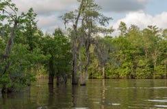 Água e árvore de Honey Island Swamp Tour With em Nova Orleães, Louisiana foto de stock royalty free