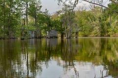 Água e árvore de Honey Island Swamp Tour With em Nova Orleães, Louisiana fotografia de stock
