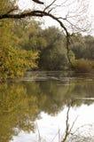 Água e árvores Foto de Stock Royalty Free