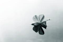 Água e flor Foto de Stock Royalty Free