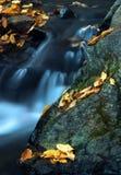 Água e folhas 1. Fotografia de Stock Royalty Free