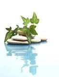 Água e folhas Fotografia de Stock